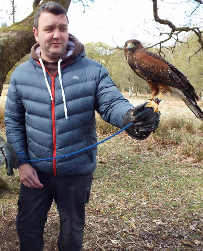 Gryff the Harris Hawk